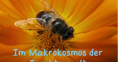 Im Makrokosmos der Insektenwelt