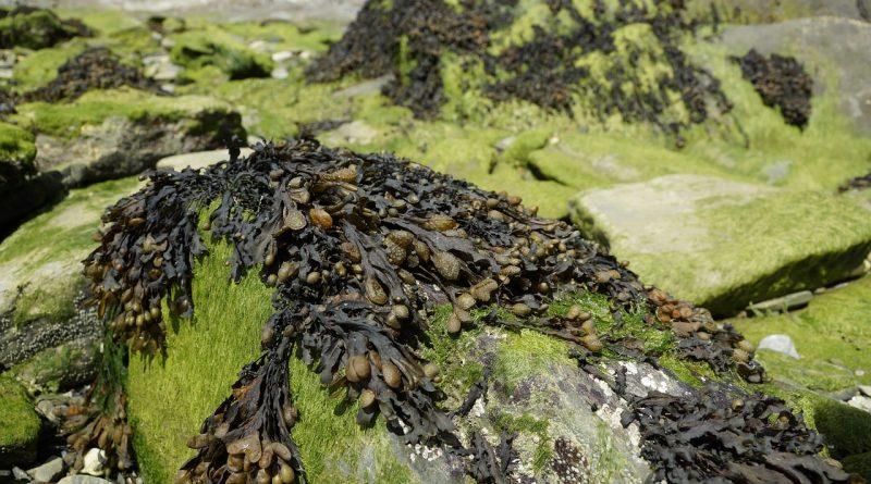 Algen Kraftstoffe Rohstoff